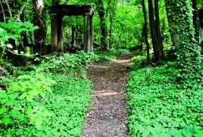 Zielona ścieżka na cmentarz żydowskim