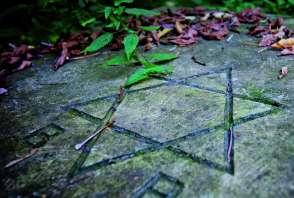 gwiazda Dawida wyryta na płycie kamiennej