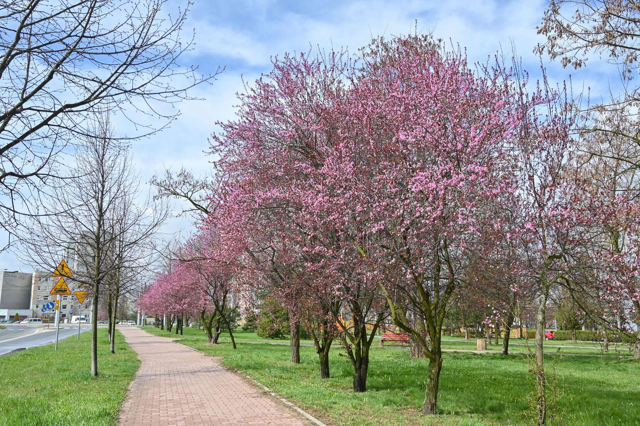 alejka drzew